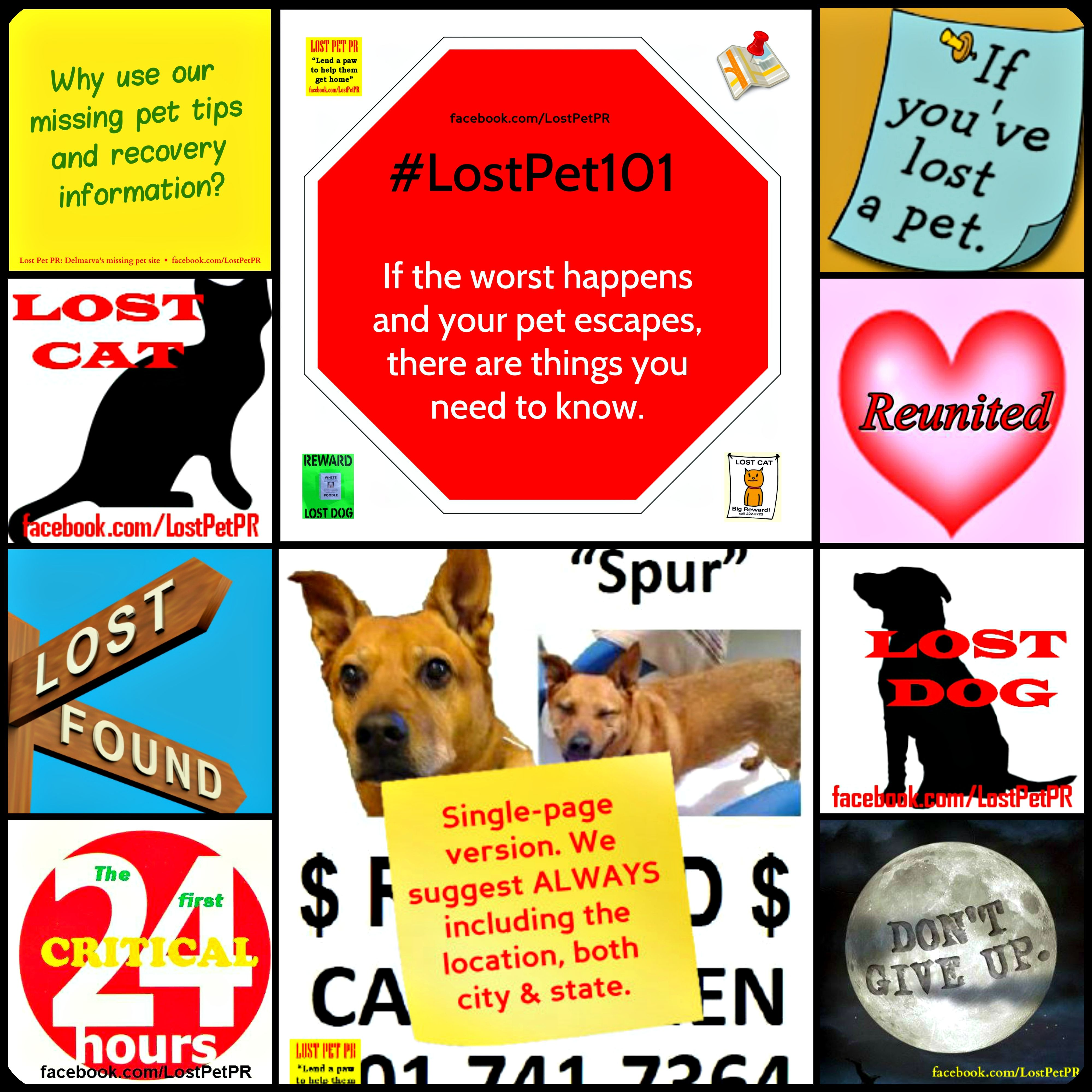 Delmarva S Lost And Found Pet Network Losing A Pet Find Pets Pet Hacks