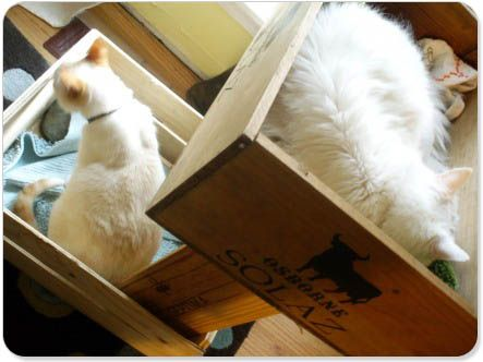 kittybunkbed made out of wine crates. love!