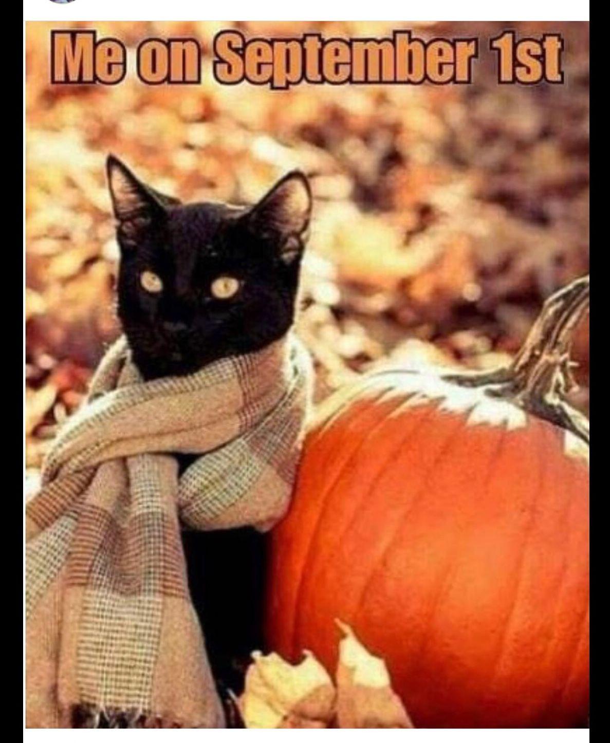 Pin by Terri Christensen Buckner on Halloween/Thanksgiving