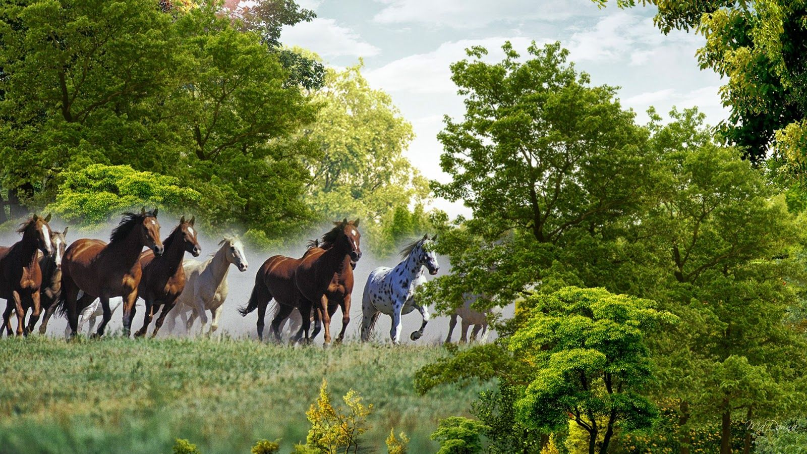 Must see Wallpaper Horse Landscape - 4160c2d1f28473772a934b864614770c  You Should Have_366320.jpg