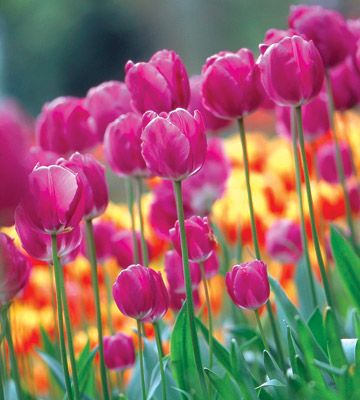 Add pockets of color and cheer with containers planted with spring-blooming bulbs. It's easy -- we'll show you how.