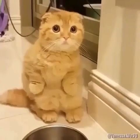 "@discover.cats on Instagram: ""Best compilation ever 😂"""