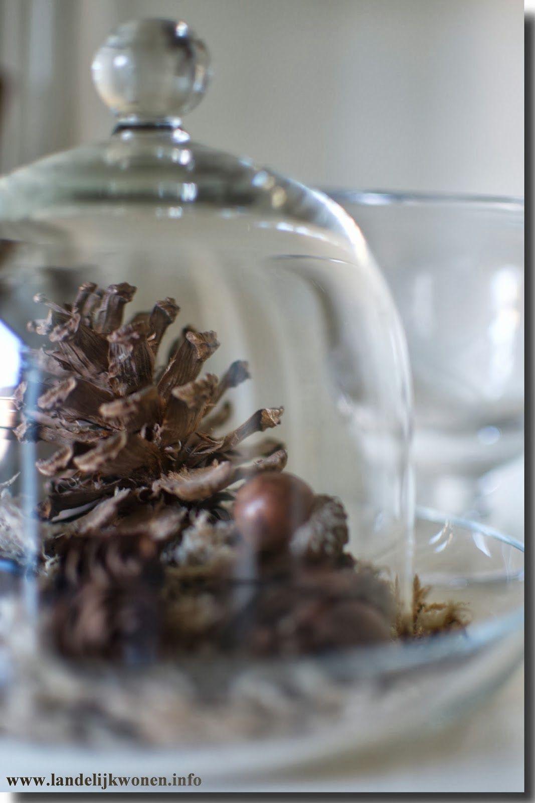 Cloche | Glass cloche, Cloche domes, Fall deco