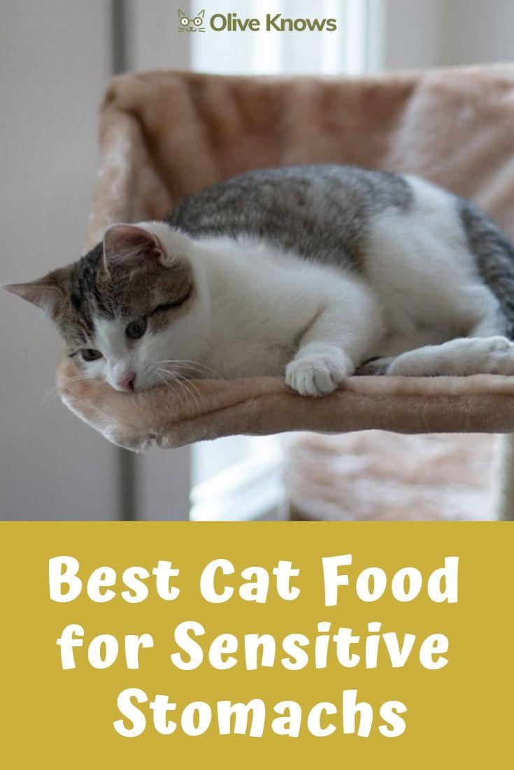 Best cat food for sensitive stomachs your cat needs best