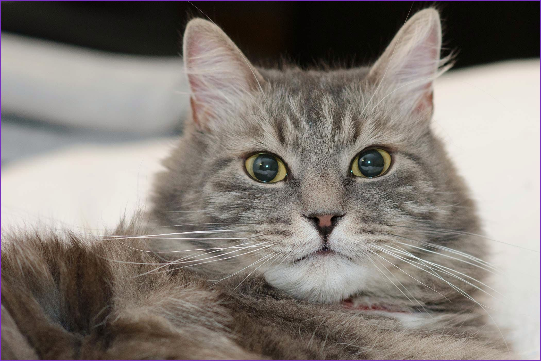 Awesome why Do Cats Stare at the Wall Cat symptoms, Cat