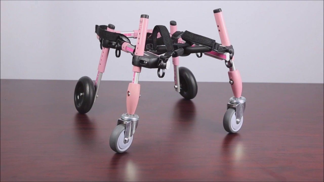 Small 4 Wheel Quad Walkin Wheels Dog Wheelchair Instructions Dog Wheelchair Wheelchair Quad