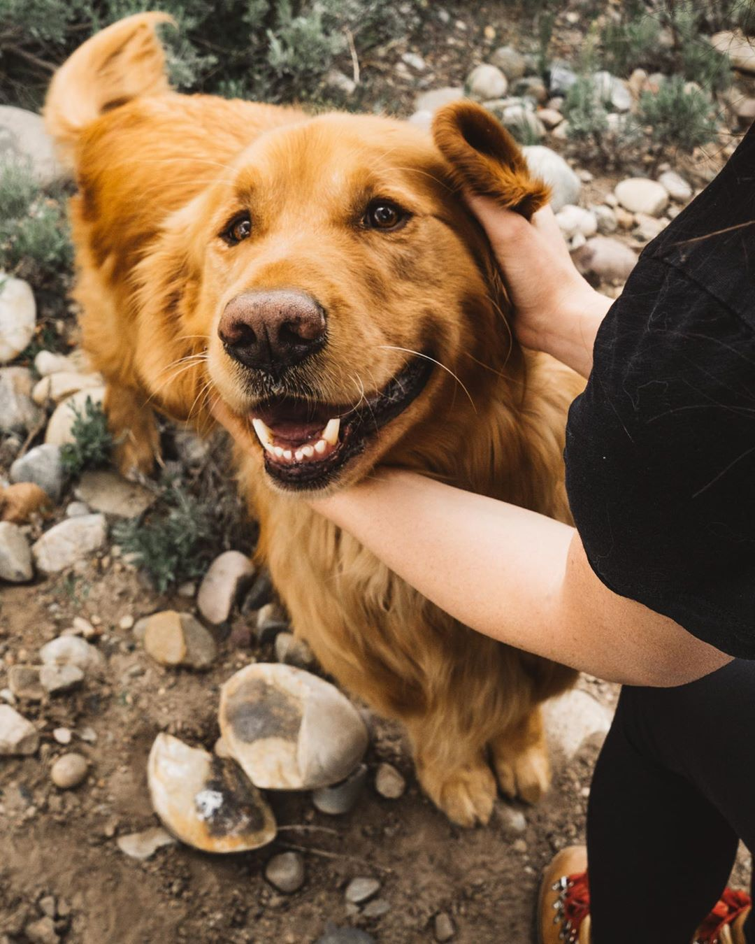 Aspen The Mountain Pup On Instagram It Feels Like Fall Today