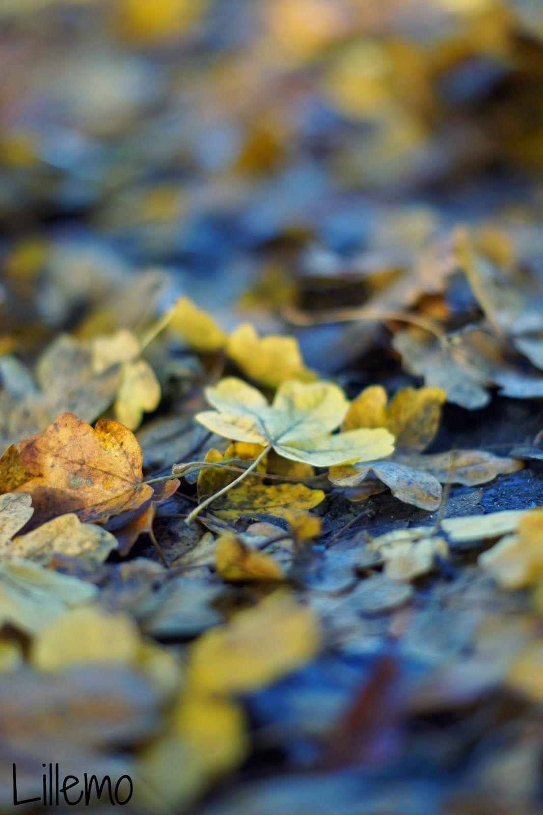 lillemo: der Herbst