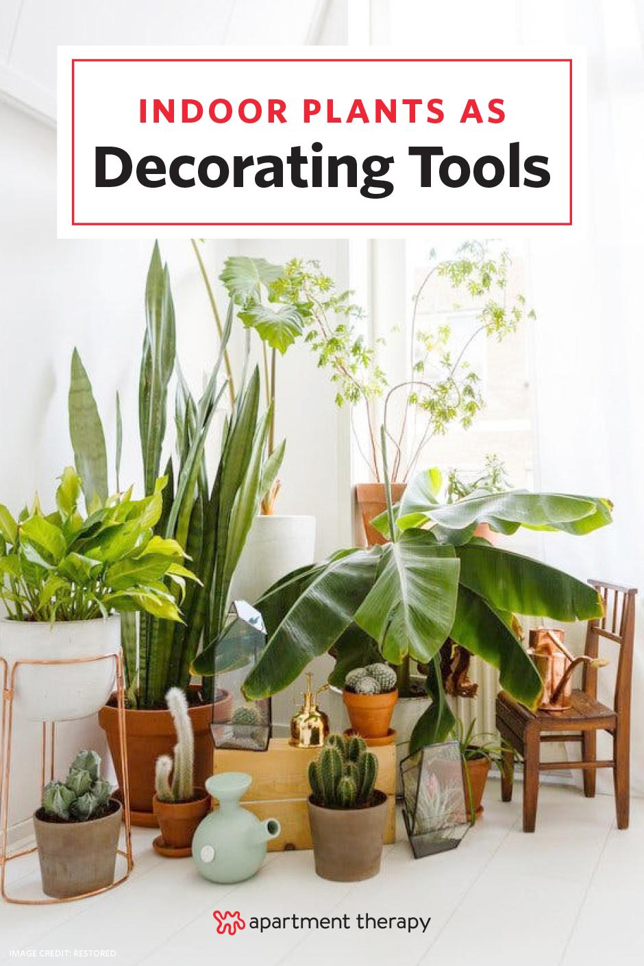 inside plants decoration - HD768×1110