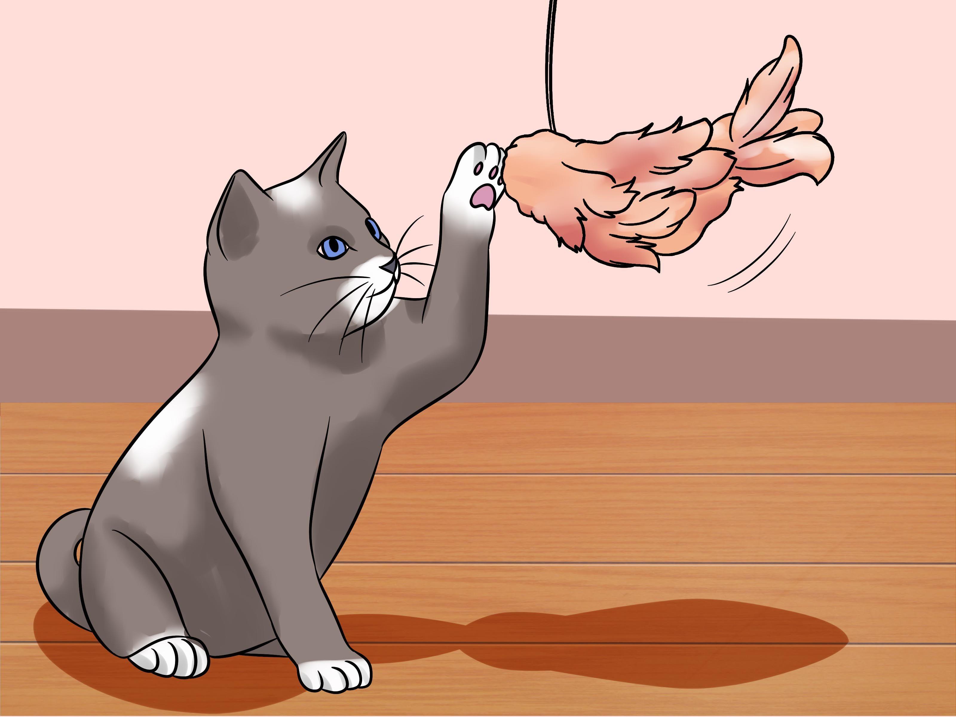 6 Ways To Train A Kitten Training A Kitten Kitten Kittens