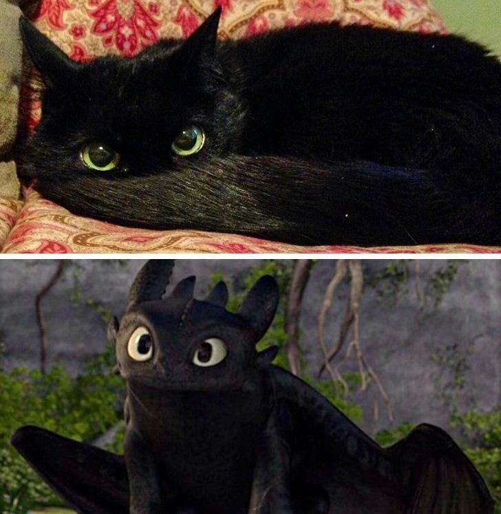 15 Pictures Proving Cats Are Masters of Mimicry, and We're