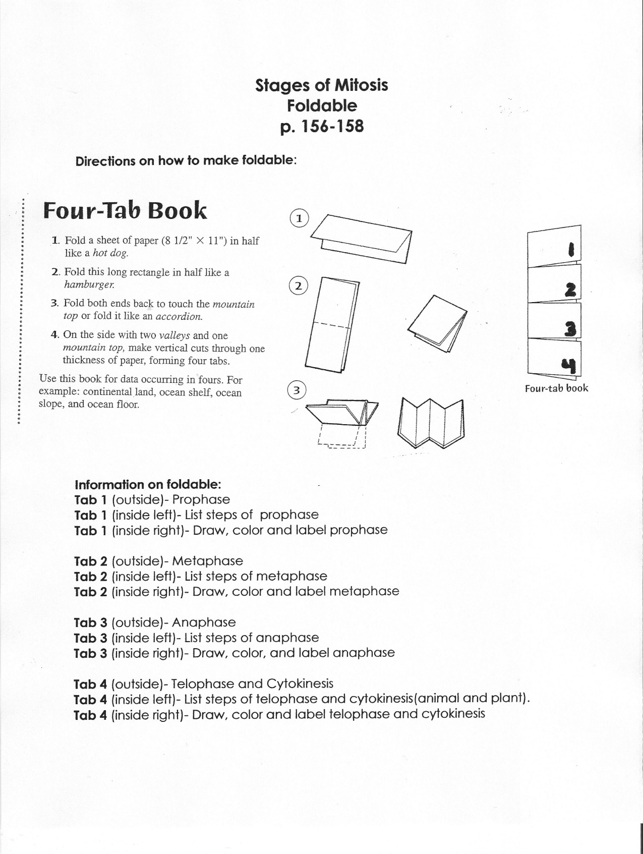 Vocabulary Foldable Template Stages of Mitosis Foldable