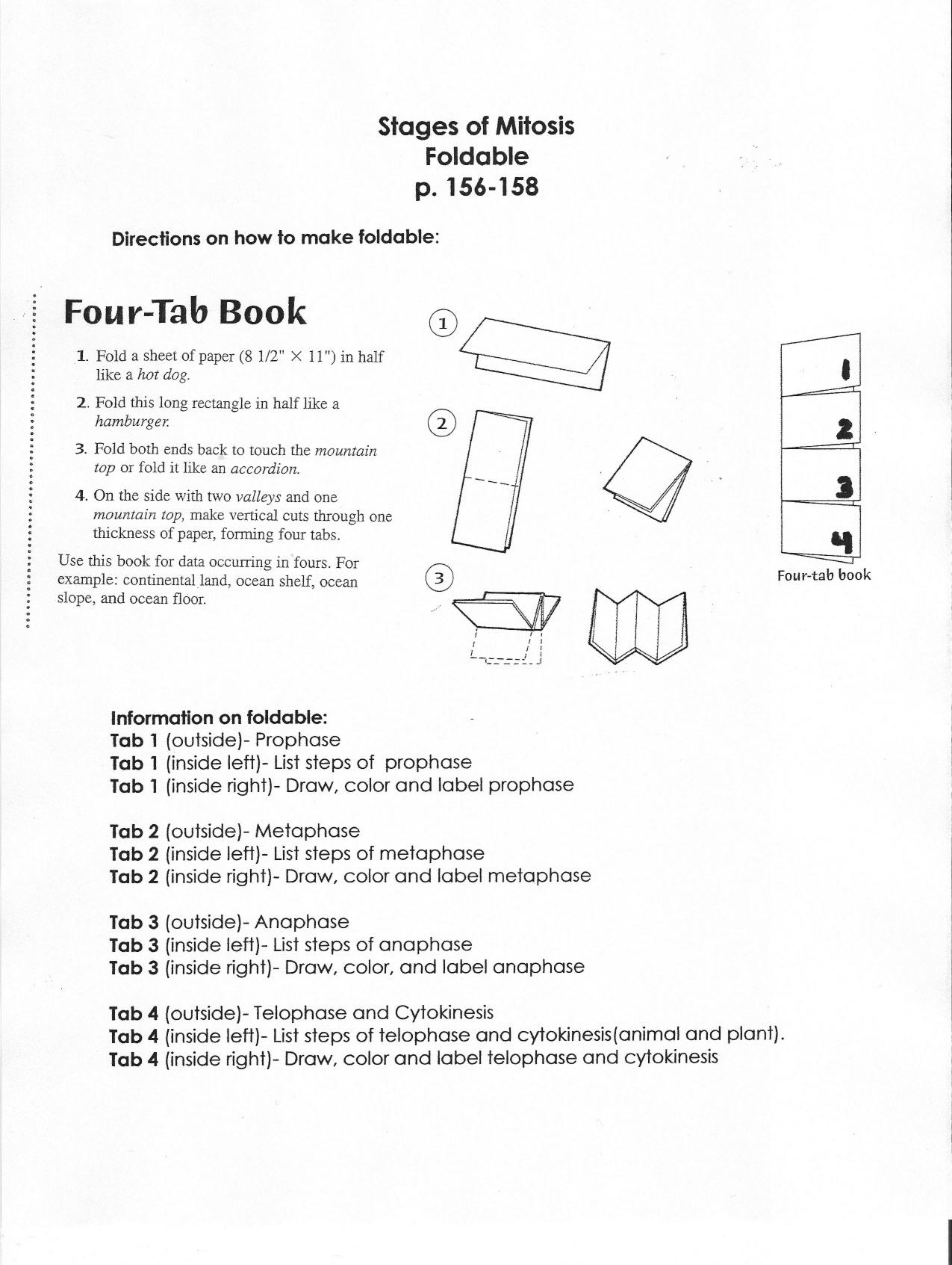 Vocabulary Foldable Template – Meiosis Vocabulary Worksheet