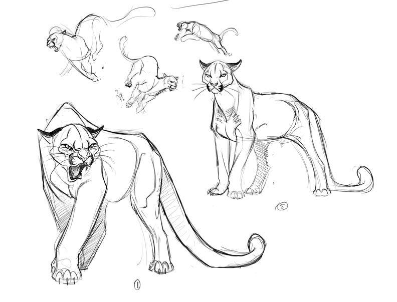 D Line Drawings Locations : Cartoon cougar drawing pixshark images