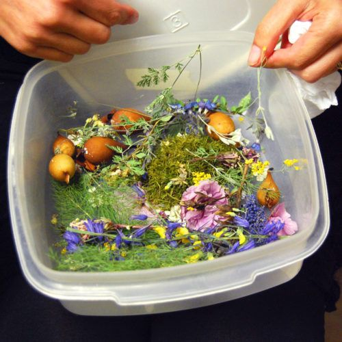6 Tips on How to Prepare & Embed Organics in Nunn Design 2-Part Resin + Videos