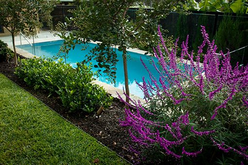 Landscape Design And Interior Design Projects Sydney Backyard Fences Fence Landscaping Modern Fence