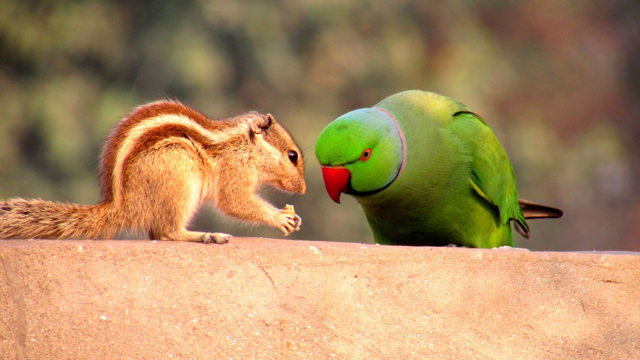 Its a story of a squirrel and a parrot lol....... talking with love ;)