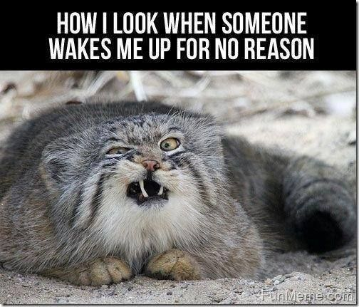 Funny Quotes Funny Pics Hilariousness Funny Jokes Jokes Funny For More Funny Quotes And Pics Visit Www Bestfunnyjoke Funny Animals Cute Animals Funny Cats