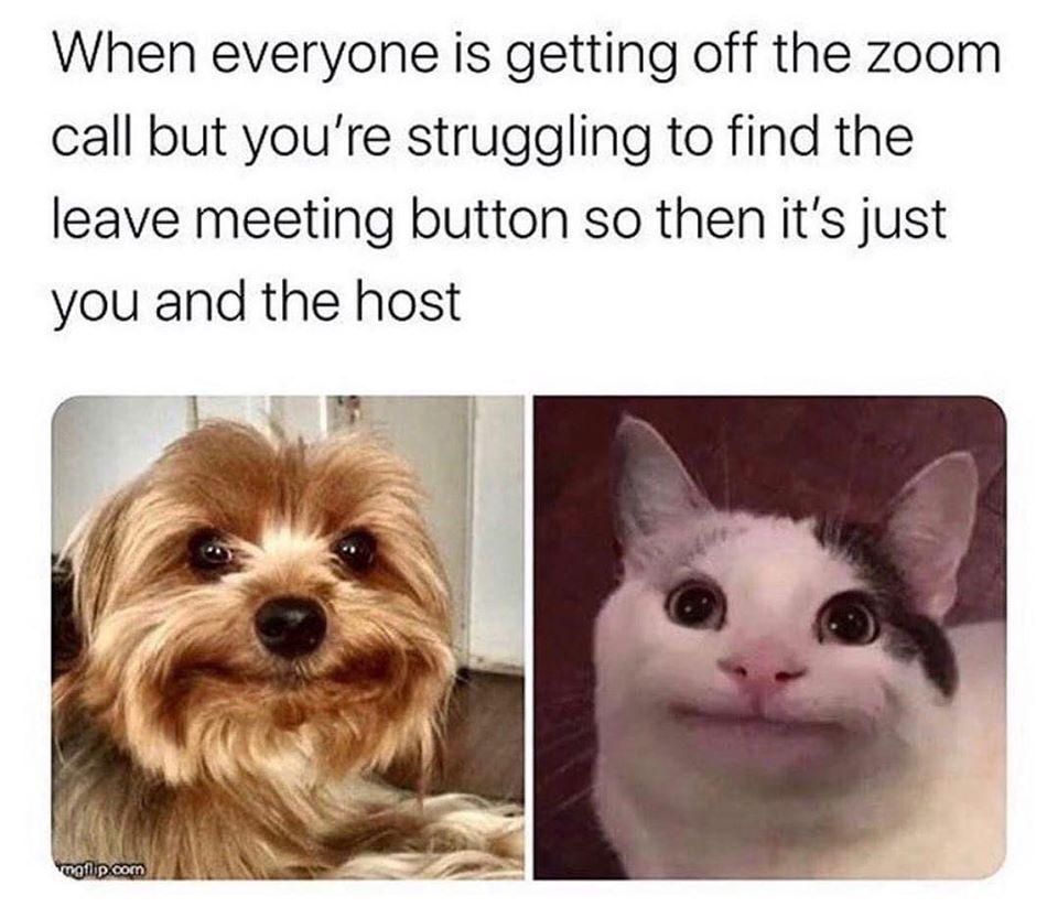 Zoom Humor Funny Coworker Memes Funny Animal Memes Work Memes