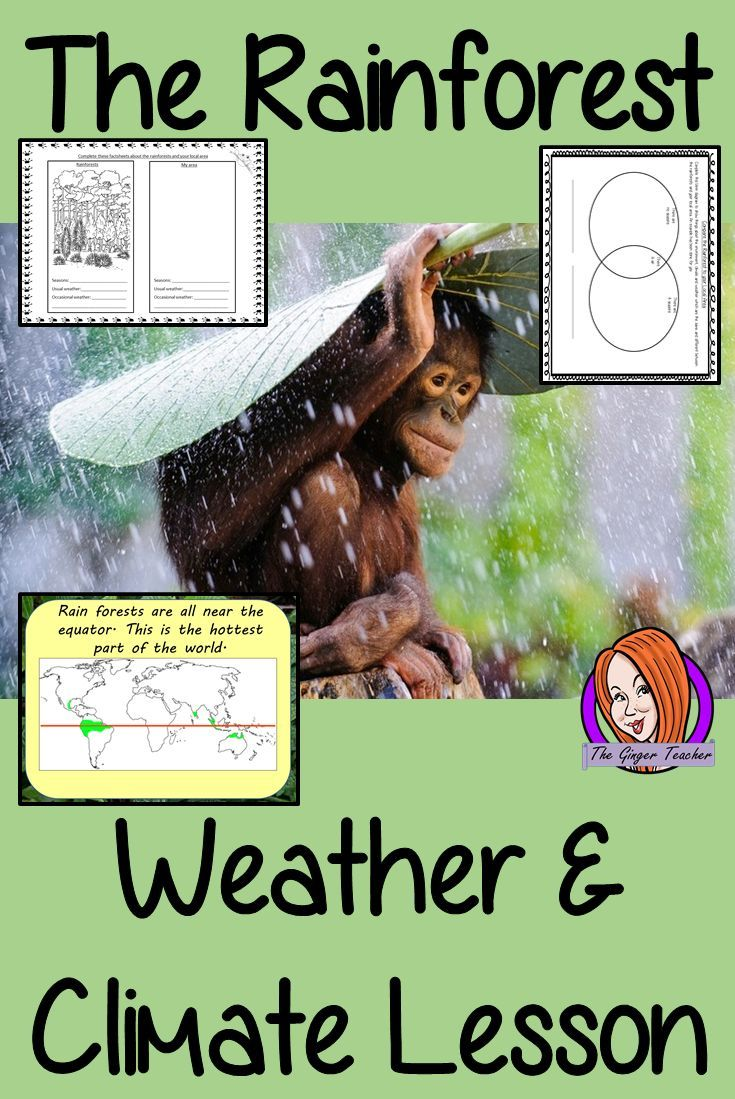 Understanding Rainforest Weather and Climate - Complete STEAM Lesson ...