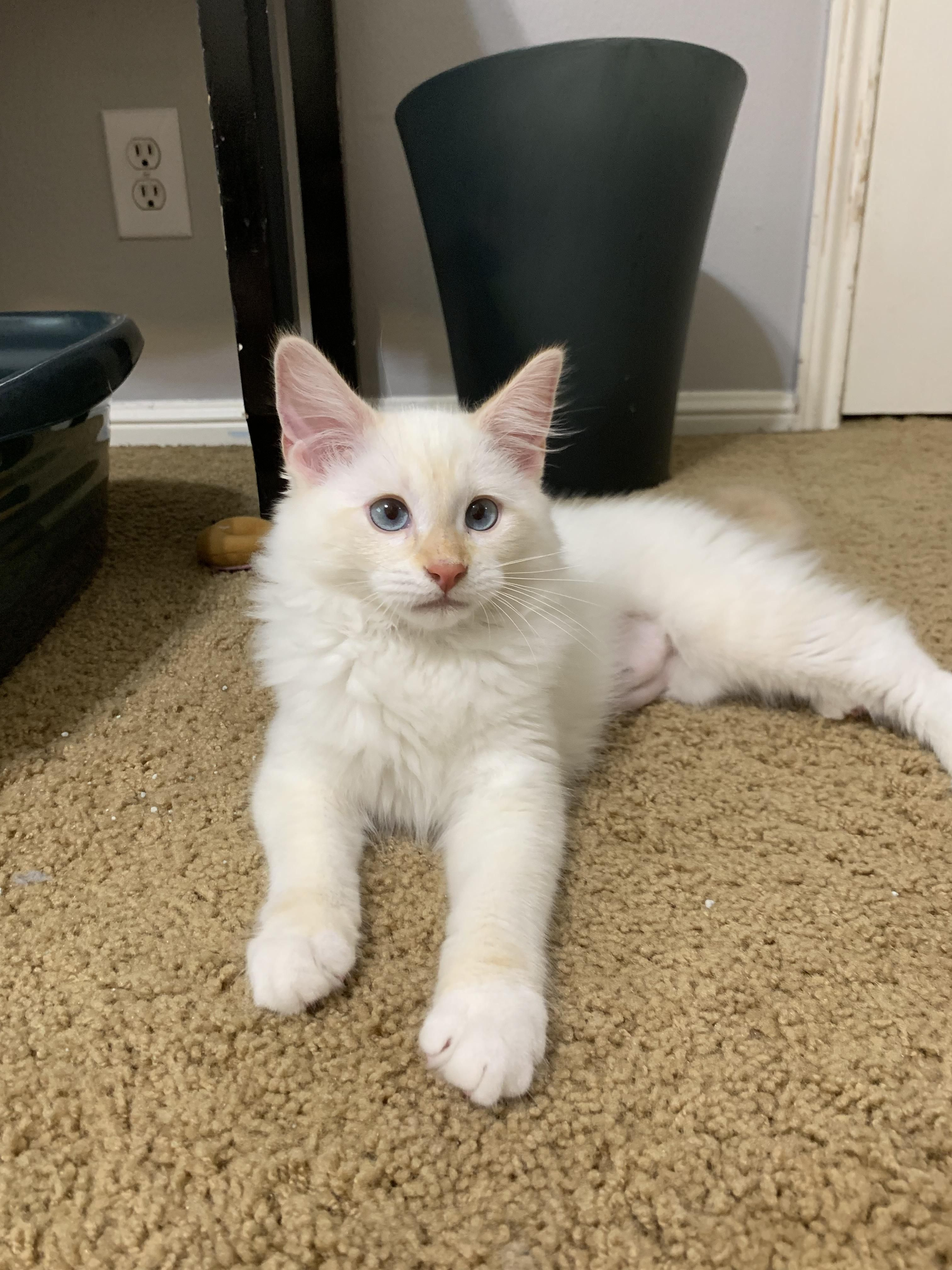 I finally got my first kitten today and I couldnt be