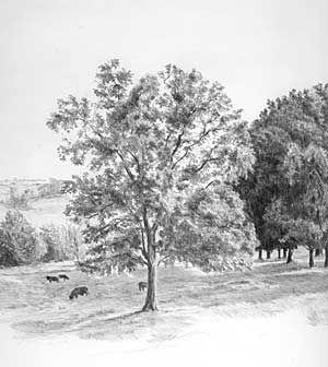 Einen Baum Baume Wald Zeichnen Anleitung Diane Wright