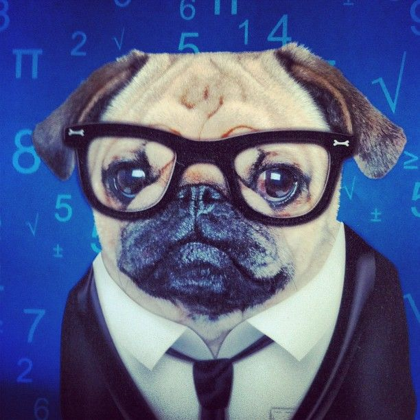 Easy Ways Of Caring Of A Dog Super Smart Dogs Baby Pugs Cute