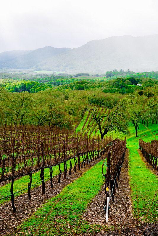 Beautiful California Vineyards In Sonoma Wine Tasting