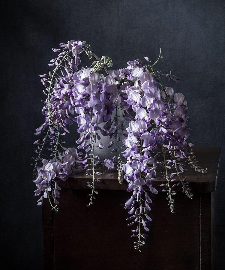 Wisteria Gliciniya By Olya Olga On 500px Flowers Black Background Still Life Flowers Wisteria
