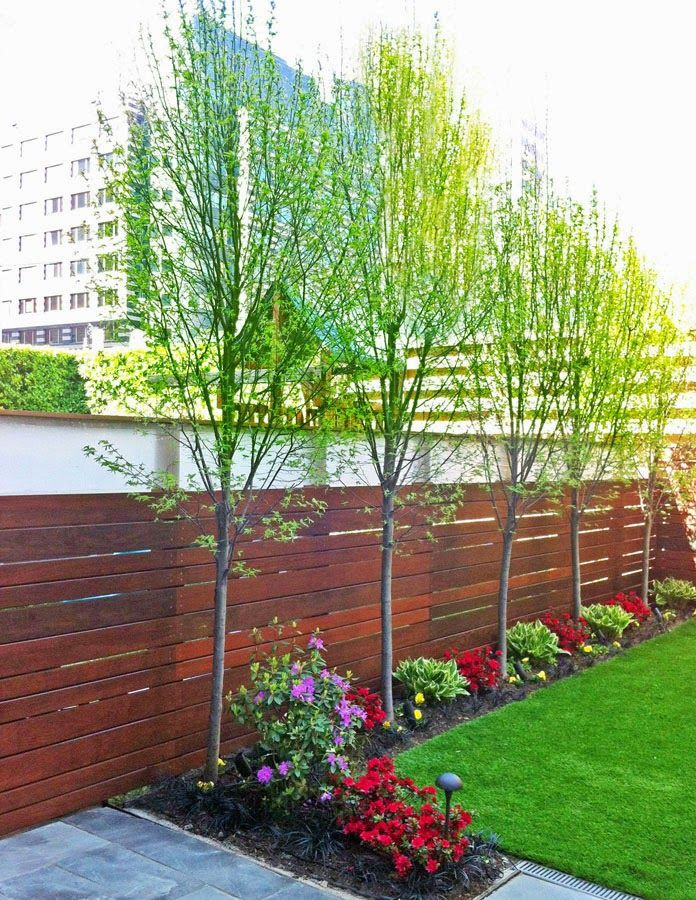 Trees that can grow along a fence line garden for Garden design help