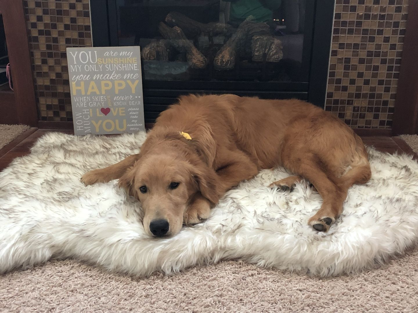 The Best Orthopedic Dog Bed & Faux Fur Memory Foam Dog Bed