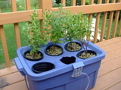 DIY Hydroponic Herb Garden Basically the plants sit in plastic