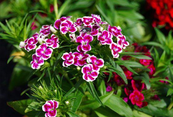 plantines flores primavera