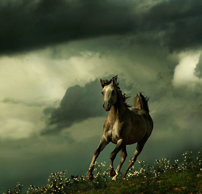 View All Images At أجمل خيول العالم صور Folder Beautiful Horses Photography Horses Horse Pictures