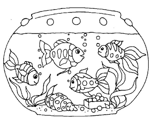 Various Fish Inside Fish Tank Coloring Page Netart Fish Coloring Page Fish Tank Drawing Coloring Pages