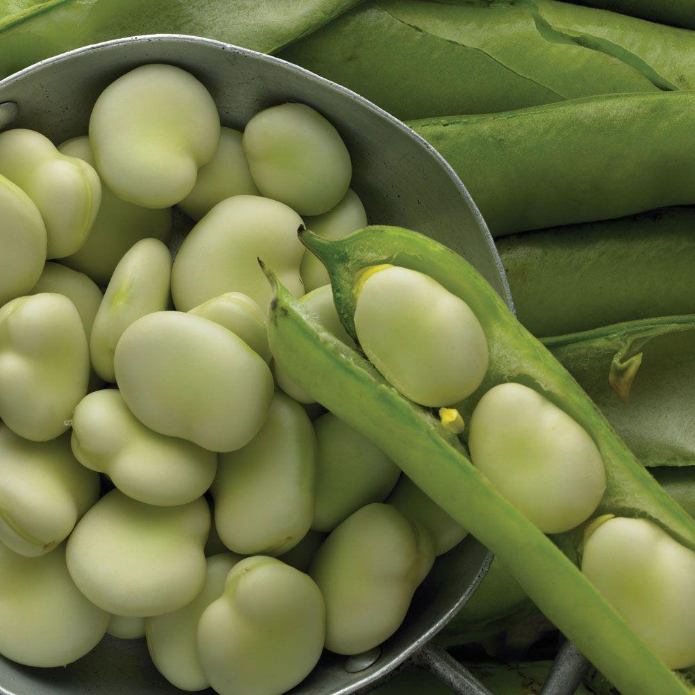 Broad Bean Jubilee Hysor Beans Vegetable Vegetables 400 x 300