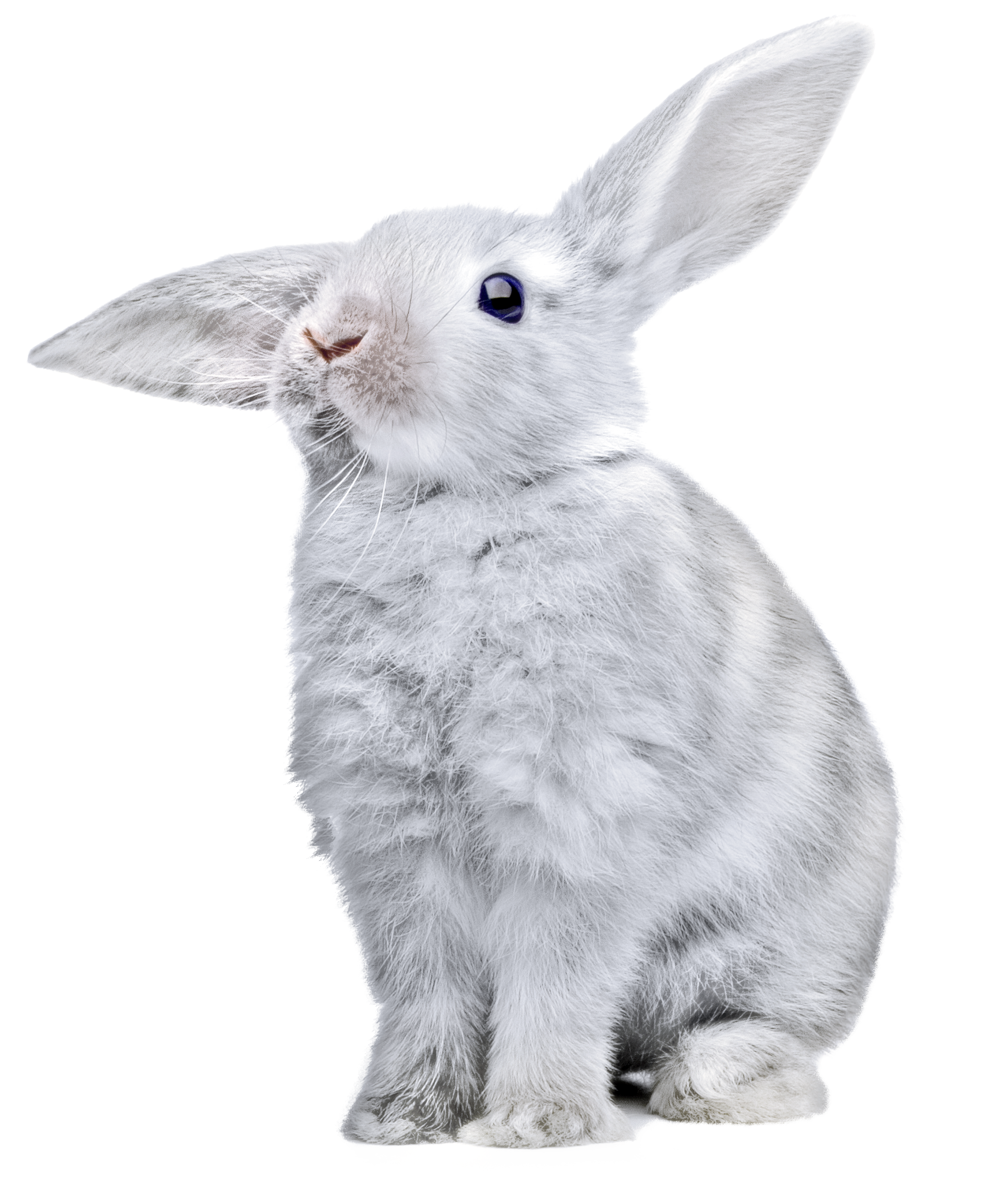 Rabbit Png Images Free Png Rabbit Pictures Download Rabbit Png Rabbit Pictures Animal Clipart