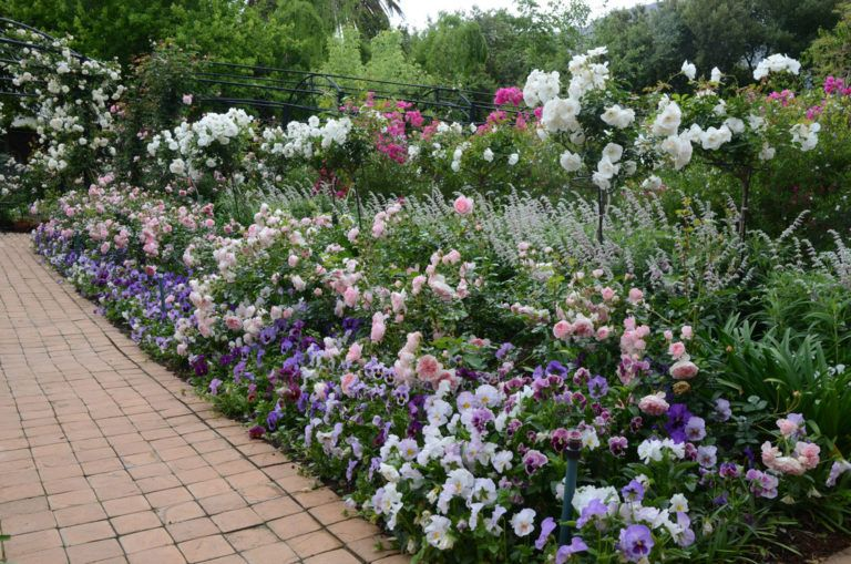 Pictures Of Rose Gardens With Companion Plants