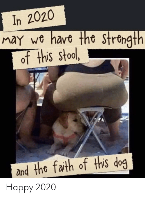 In 2020 May We Have The Strength Of This Stool The Faith Of This Dog Funny New Year Funny Humor