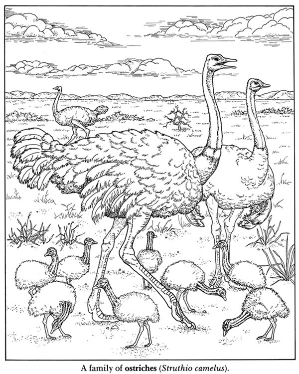 African Plains Coloring Book Dover Publications
