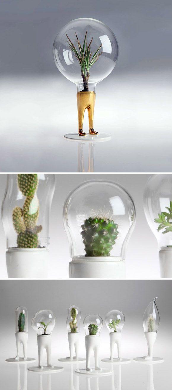 Pflanzen in einer gl hbirne tolle idee dekorationsideen pflanzen garten und diy garten - Tolle zimmerpflanzen ...