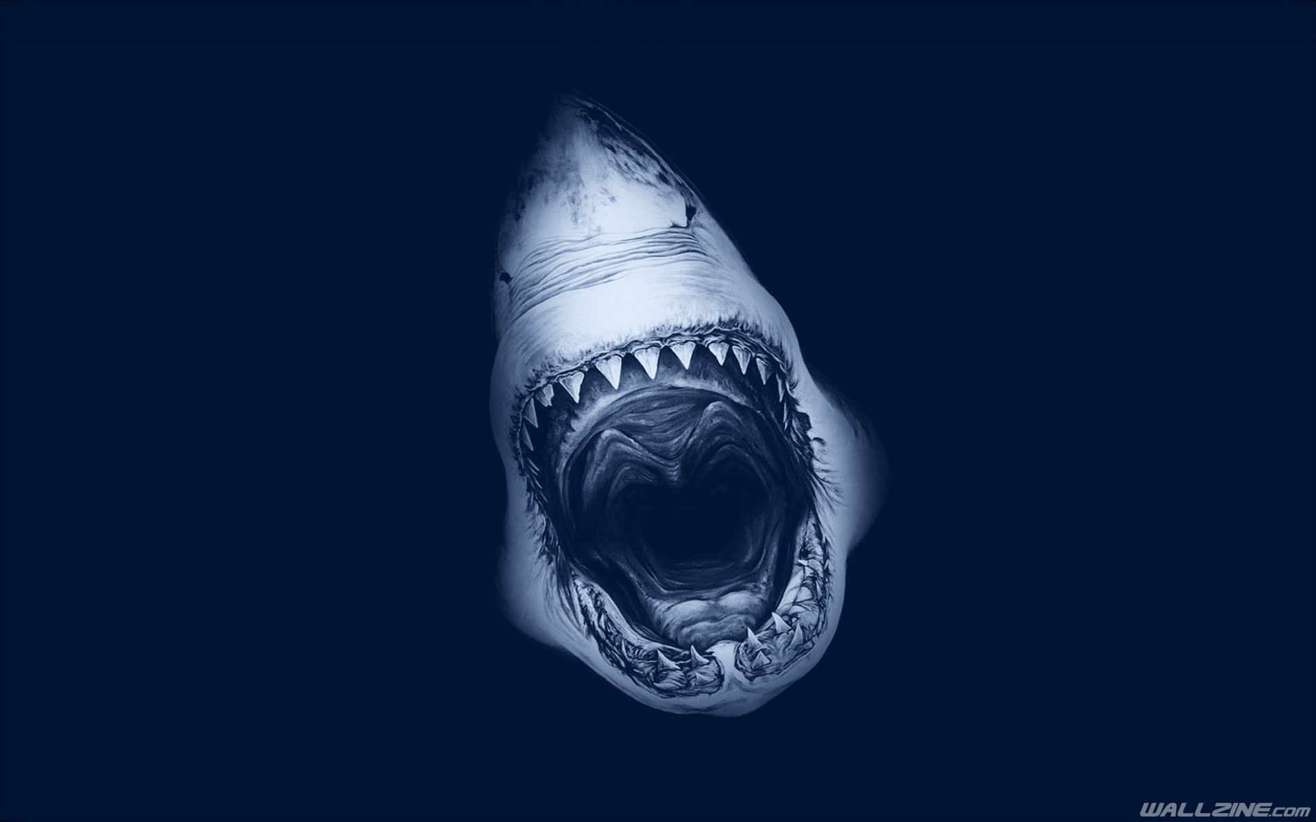 Shark Attack Art Wallpaper Arte Shark Shark Pictures Y