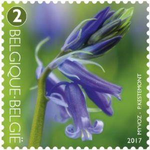Flowering common bluebell