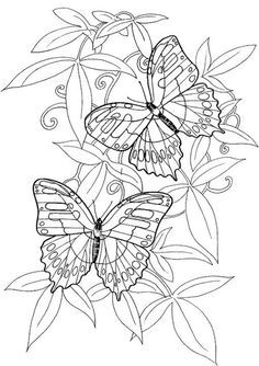 Hard butterflies Coloring Pages for Adults to print | adult coloring ...