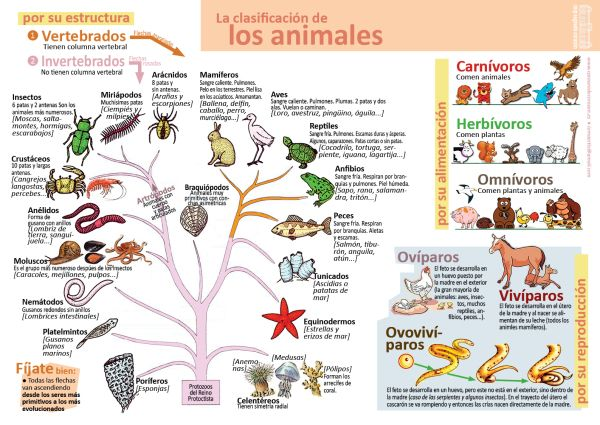 Infografías De Ciencias Naturales Clasificacion De Seres Vivos Clasificación De Animales Ciencias Naturales