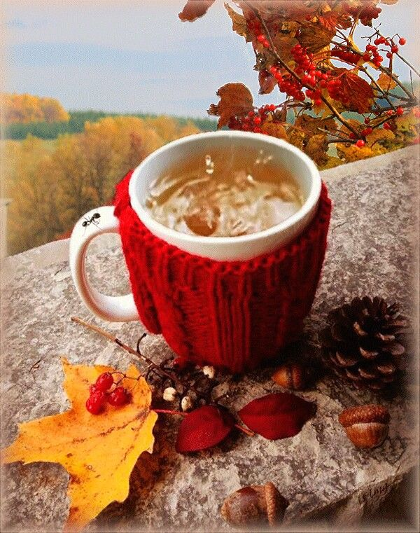 Доброе осеннее утро гифы красивые, дети вместо цветов