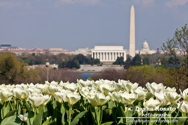 Washington DC Skyline   Washington DC Skyline with Lincoln Memorial, Washington Monument and ...