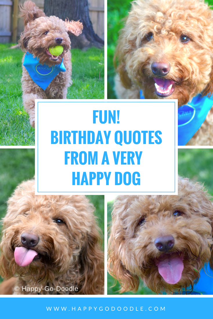 40 Fun Birthday Quotes From A Ridiculously Happy Birthday Dog Happy Birthday Dog Dog Birthday Quotes Birthday Quotes