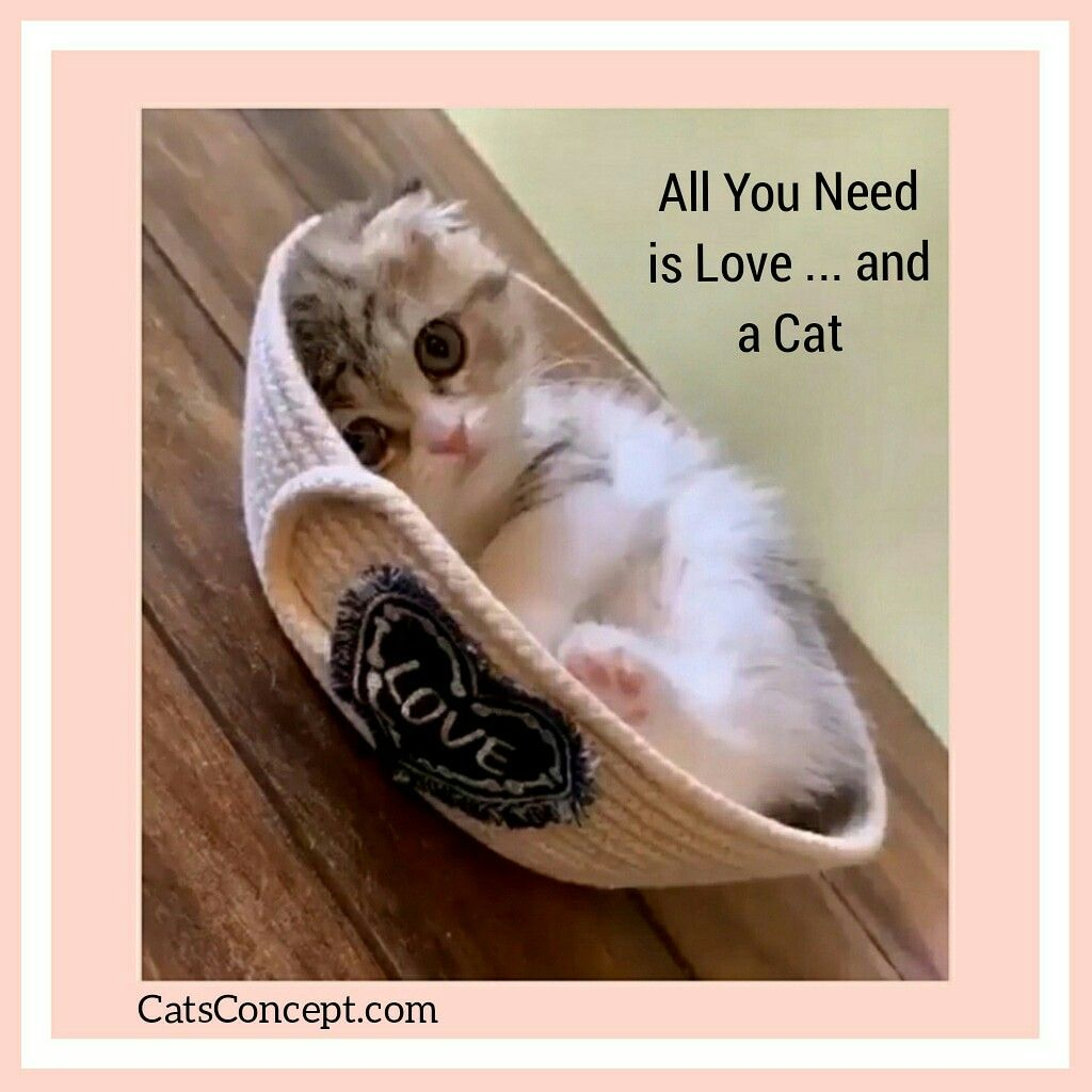 A Simple Formula Cats Kitten Accessories Cat Merchandise