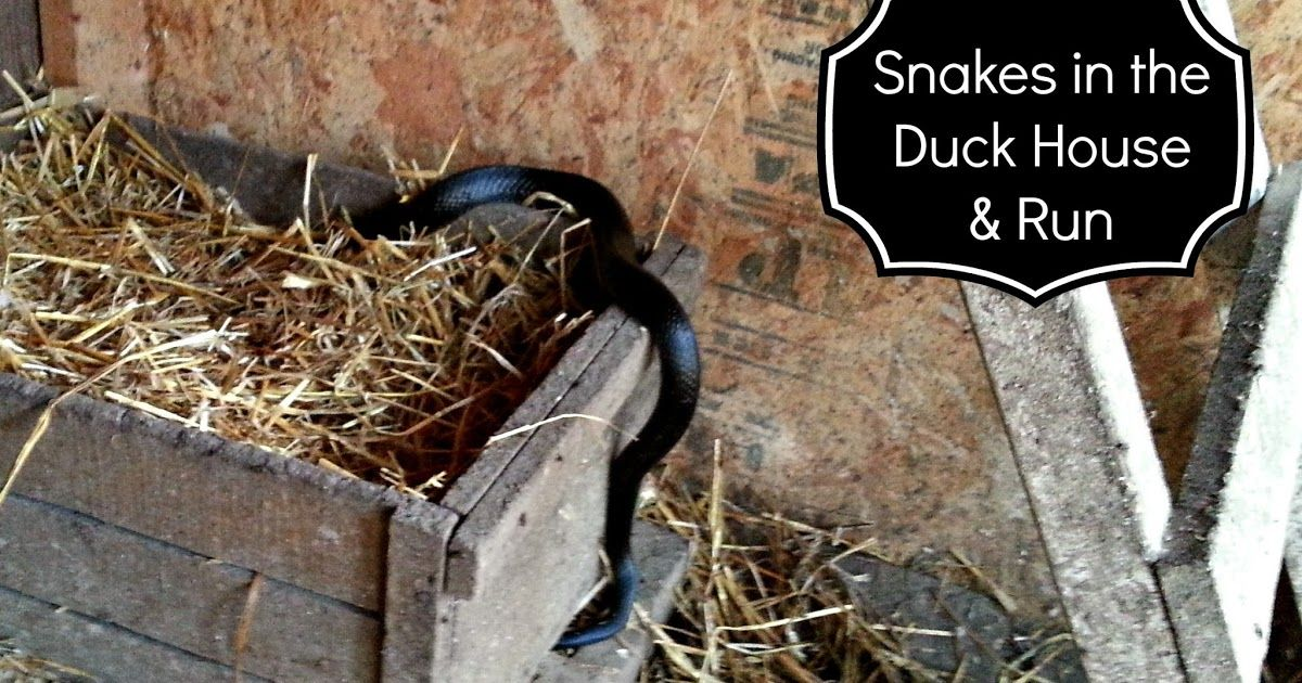 Snake in the Duck House! 9 Tips to Help Repel Snakes